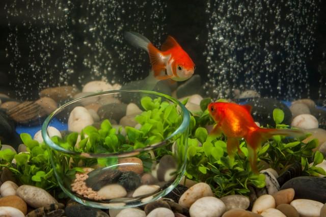 foodbowl2