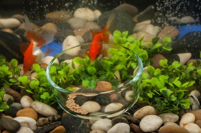 foodbowl3